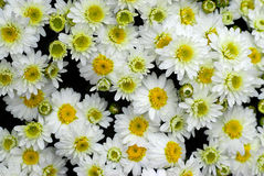 Fondo de flores Fotos de archivo