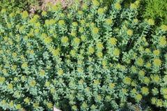 Fondo de flores amarillas imágenes de archivo libres de regalías