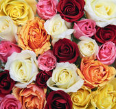 Fondo de flores color de rosa Imagen de archivo libre de regalías