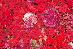 Fondo de flores rojas Foto de archivo