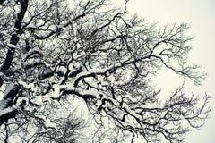Fondo de Forest Snow del invierno con los árboles Imagen de archivo