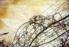 Fondo de Grunge con la vid sobre el alambre de púas Fotografía de archivo libre de regalías