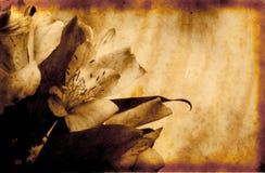 Fondo de Grunge con las flores Fotografía de archivo