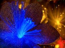 Fondo de hadas hermoso de las flores que brilla intensamente Imagenes de archivo