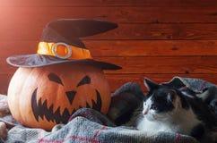 Fondo de Halloween, calabaza anaranjada en sombrero y gato en un de madera Imágenes de archivo libres de regalías