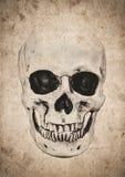 Fondo de Halloween con el cráneo en el periódico viejo del vintage Fotos de archivo libres de regalías