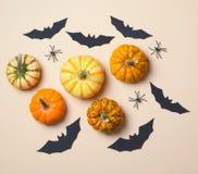 Fondo de Halloween, diversas calabazas coloridas, palos negros y arañas fotografía de archivo