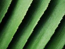 Fondo de hoja de palma hermoso Fotografía de archivo libre de regalías