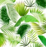 Fondo de hoja de palma del árbol de la mezcla Imágenes de archivo libres de regalías
