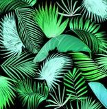 Fondo de hoja de palma del árbol de la mezcla Imagen de archivo