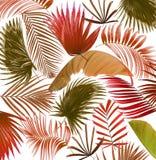Fondo de hoja de palma del árbol de la mezcla Fotos de archivo