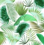 Fondo de hoja de palma del árbol de la mezcla Imagen de archivo libre de regalías