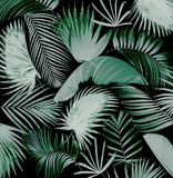 Fondo de hoja de palma del árbol de la mezcla Foto de archivo