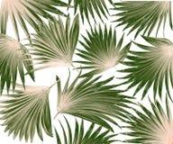 Fondo de hoja de palma del árbol de la mezcla Fotografía de archivo