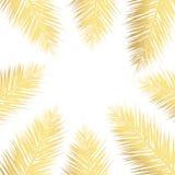 Fondo de hoja de palma del vector del oro Fondo dibujado tropical del texto foto de archivo libre de regalías