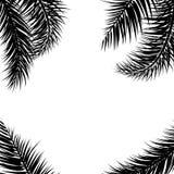 Fondo de hoja de palma negro del vector Fondo dibujado tropical del texto fotos de archivo libres de regalías
