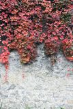 Fondo de hojas otoñales fotografía de archivo
