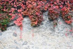Fondo de hojas otoñales imagen de archivo
