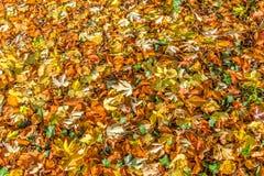 Fondo de hojas otoñales coloridas caidas Foto de archivo libre de regalías