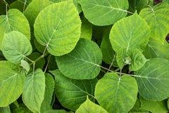 Fondo de hojas verdes foto de archivo