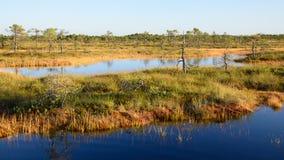 Fondo de Kakerdaja, naturaleza estonia del pantano de la tarde de septiembre Fotografía de archivo libre de regalías