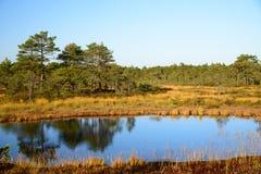 Fondo de Kakerdaja, naturaleza estonia del pantano de la tarde de septiembre Fotos de archivo libres de regalías