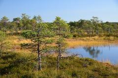 Fondo de Kakerdaja, naturaleza estonia del pantano de la tarde de septiembre Fotos de archivo