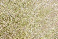 Fondo de láminas de la hierba en hora solar Imagen de archivo libre de regalías