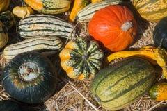 Fondo de la acción de gracias de la calabaza de otoño Imagen de archivo libre de regalías