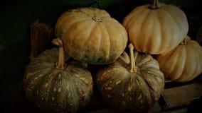 Fondo de la acción de gracias de la calabaza de otoño imagen de archivo