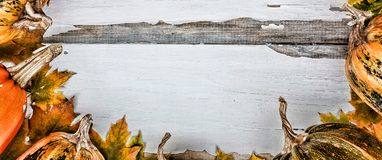 Fondo de la acción de gracias Calabazas en un fondo de madera blanco Espacio libre para el texto Visión desde arriba Imagen de archivo