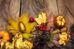 Fondo de la acción de gracias con la calabaza, la bellota y el leavesde de oro Fotografía de archivo
