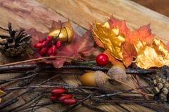 Fondo de la acción de gracias con el arce l de las bellotas, de oro y colorido Foto de archivo libre de regalías