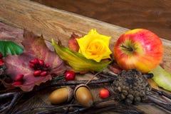 Fondo de la acción de gracias con el bérbero, las hojas de arce y r amarillo Foto de archivo libre de regalías