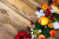 Fondo de la acción de gracias con las calabazas, flores blancas a del applesand Fotografía de archivo
