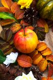 Fondo de la acción de gracias con la manzana madura Fotos de archivo libres de regalías