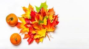 Fondo de la acción de gracias con Pampkins y el marple colorido del otoño Fotografía de archivo