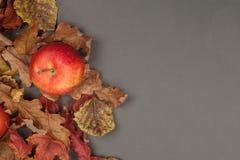 Fondo de la acción de gracias o de la caída con las hojas de la manzana y de la caída Tarjeta de felicitación con las frutas esta Foto de archivo