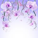 Fondo de la acuarela del vector con las orquídeas Imagen de archivo libre de regalías