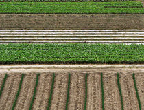 Fondo de la agricultura Imagenes de archivo