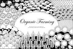 Fondo de la agricultura biológica Capítulo con paisaje abundante de los campos stock de ilustración