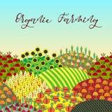 Fondo de la agricultura biológica Modelo con paisaje abundante de los campos Fotos de archivo libres de regalías
