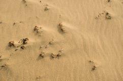 Fondo de la arena, textura Foto de archivo