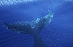 Fondo de la ballena Imagen de archivo