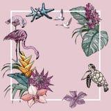 Fondo de la bandera del verano con los pájaros tropicales de las flores, del flamenco y las tortugas stock de ilustración