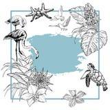 Fondo de la bandera del verano con los pájaros tropicales de las flores, del flamenco y las tortugas, blancos y negros libre illustration
