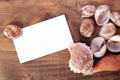 Fondo de la cáscara del mar Imagen de archivo libre de regalías