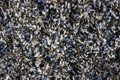 Fondo de la cáscara y de guijarros quebrados en una playa Imagen de archivo libre de regalías