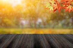 Fondo de la caída y del otoño fotos de archivo