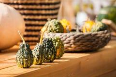 Fondo de la calabaza de la cosecha del otoño Fotos de archivo libres de regalías